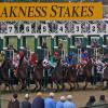 Preakness Stakes Gambling Odds & Pick